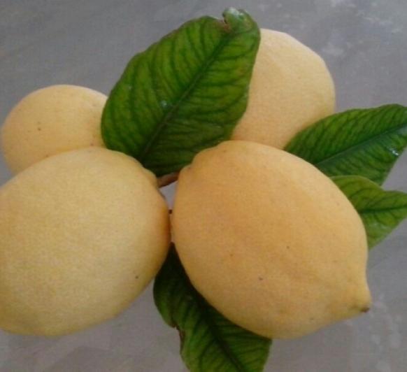 Aprovechar bien los limones con Thermomix®
